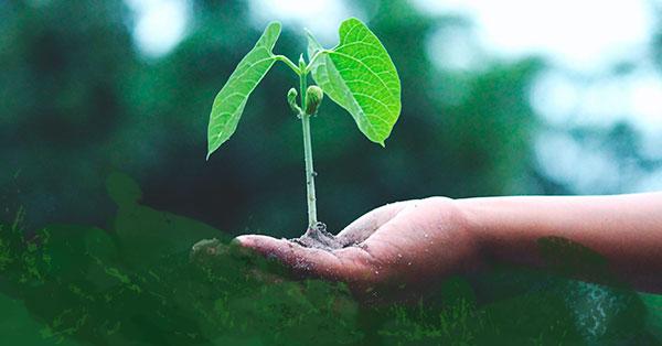 Colombia lanza por primera vez en la historia exitosa colocación de TES verdes