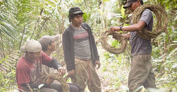 The Amazon Bioeconomy Fund